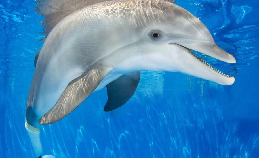 Clearwater Beach and Lunch with Marine Aquarium